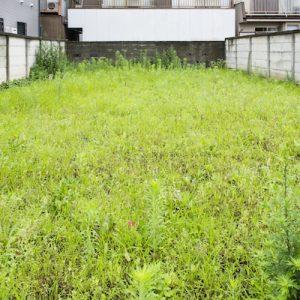 【ガーデニング】庭手入れ ~雑草を少なくするコツ~
